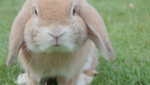 easter bunny meeting planner